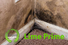 mold remediation paint